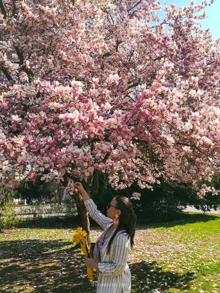 Girl picking up flowers from flower tree in Zagreb
