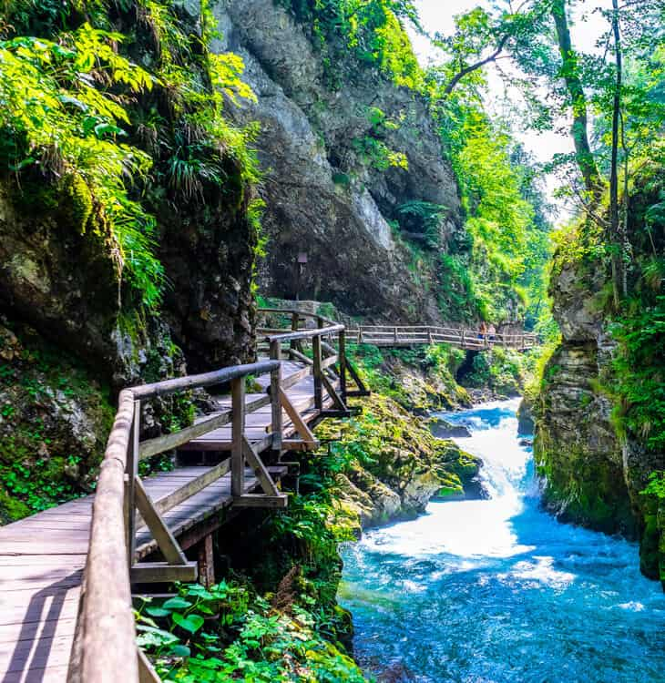 Small bridge in nature at Bled