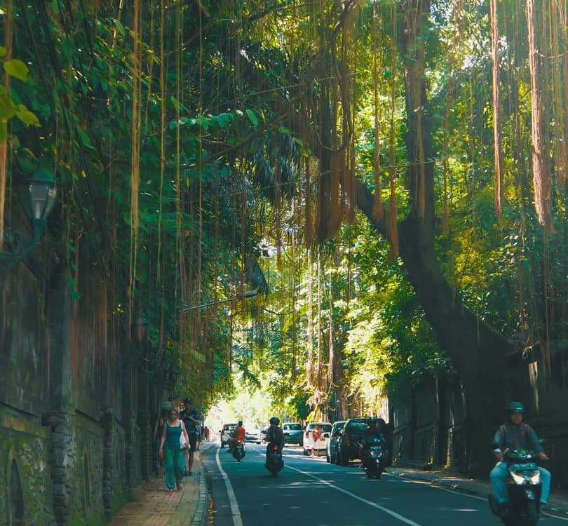 People driving and walking through forest in Ubud