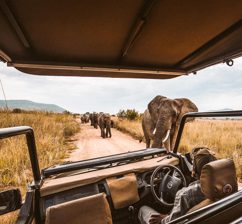 Person watching elephants walking in Africa