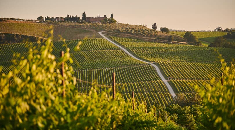 Vineyard with house in distance