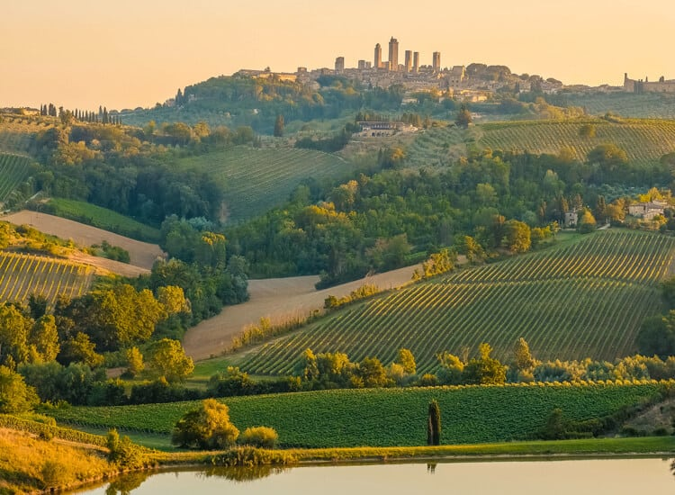 Vineyards in Tuscany with city in background
