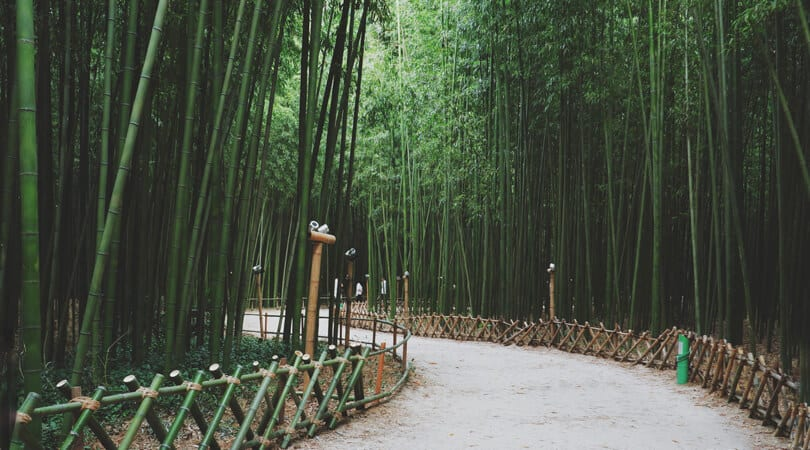 Walking path in Bamboo Forest