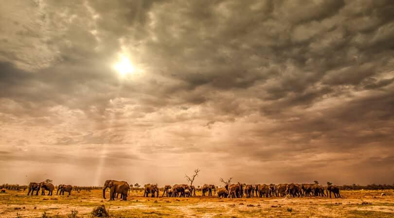 Elephants standing in sun in Botswana