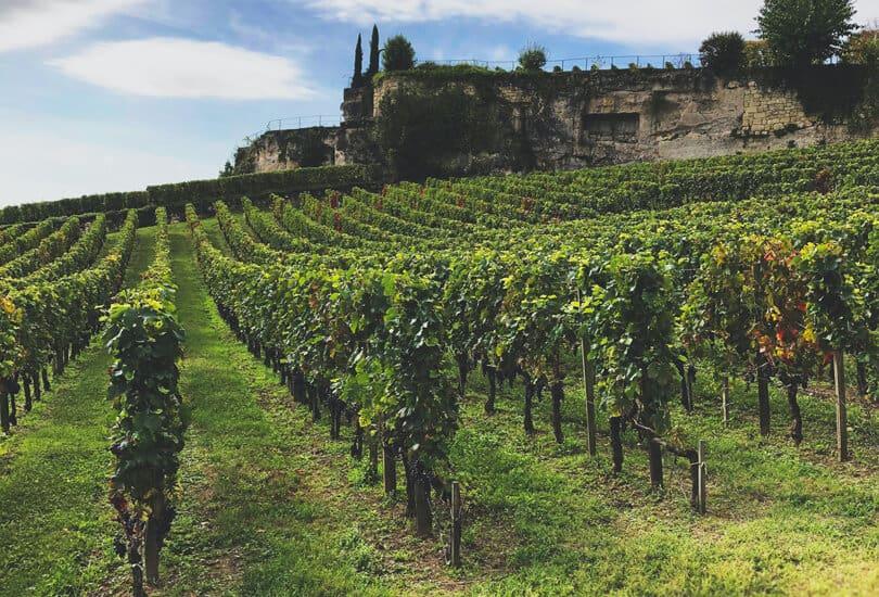 Livermore California vineyard